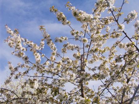 (53) Blüten