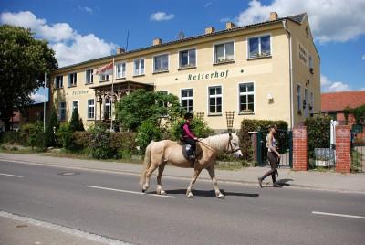 Pferd vor dem Haus