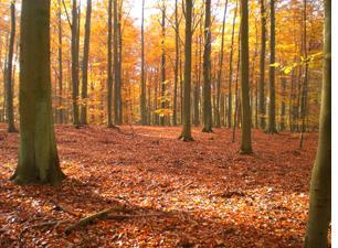 Waldfriedhof im Herbst