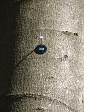 Nummerierung der Bäume