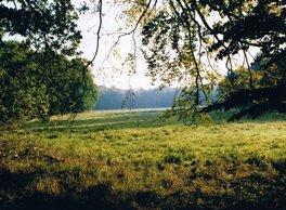 Buchheide Hammerfließwiesen