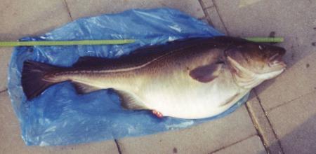 Stypmann H. - Dorsch 13.03.2004 - 2