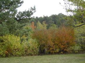 Herbstansicht 2