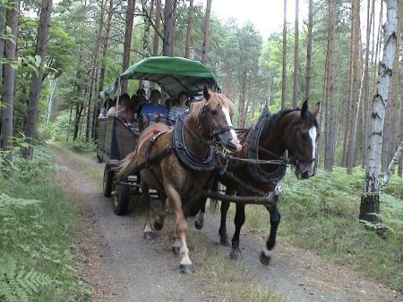 2010 Kremserfahrt durch den Loben