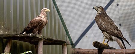 Greifvogelstation Bild1