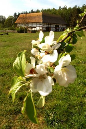 Frühlingszeit - Hochzeitszeit