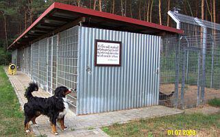 Hundezwinger in der Tierauffangstation