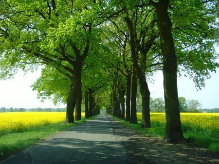 k-Langerwischer Weg.jpg