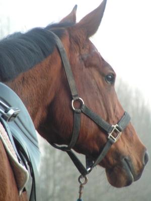 Pferd 7