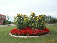 Rondell mit Sonnenblumen