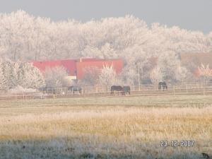 Schönfeld im Winter 1