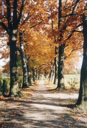 vs_Herbst_Herbst10.jpg