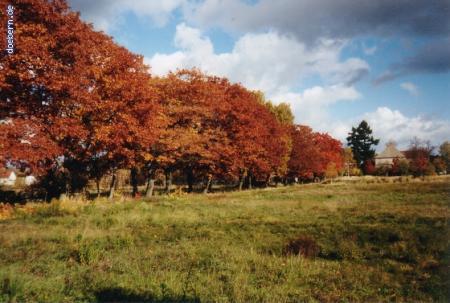vs_Herbst_Herbst4.jpg