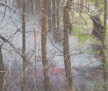 Waldbrand Bodenfeuer