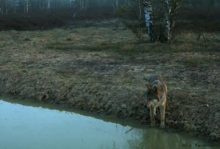 Wolf-TÜP-Wittstock