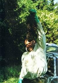 Ein Bienenvolk