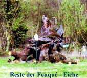 Rest der Fouqué-Eiche