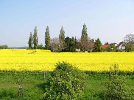 Frühling in Kubschütz