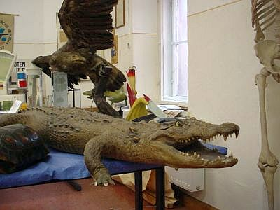 Blick ins Schulmuseum