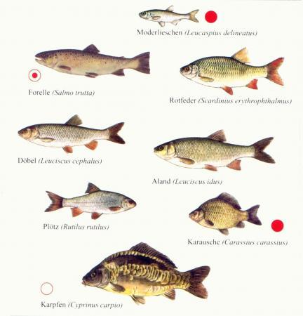 Fischfauna1
