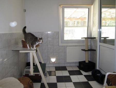 Innenraum der Katzenpension