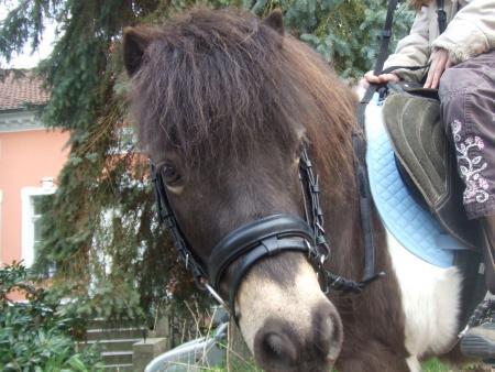 Pony_Team