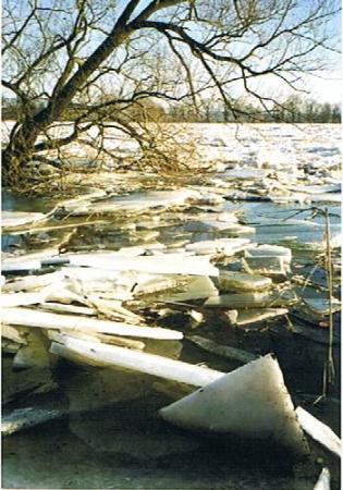 Eis auf der Oder ist ein jährlich wiederkehendes Schauspiel (Foto: H. Kaiser)